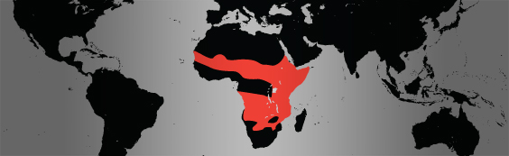 male lion map