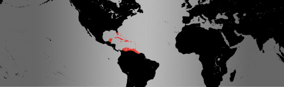 caribbean flamingo map