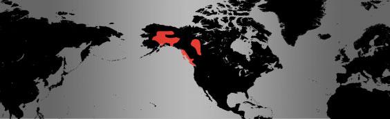 Trumpeter Swan map