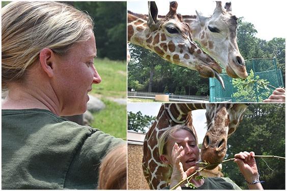 zoo keeper and giraffe