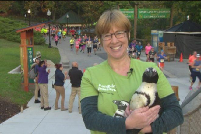 zoo keeper holding penguin