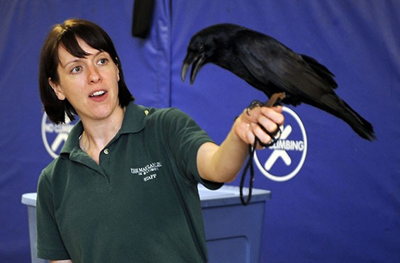 zoo keeper holding raven