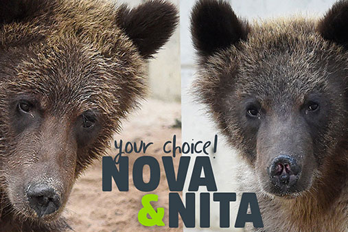 Nova and Nita