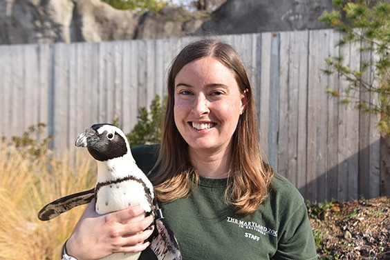 zoo keeper holding penguin