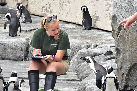 zoo keeper and penguins