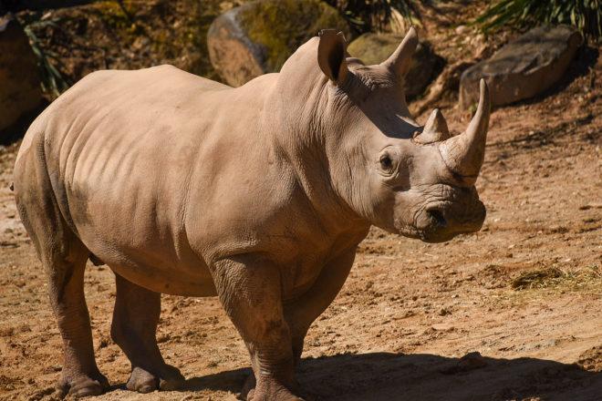 Zoo Memberships image