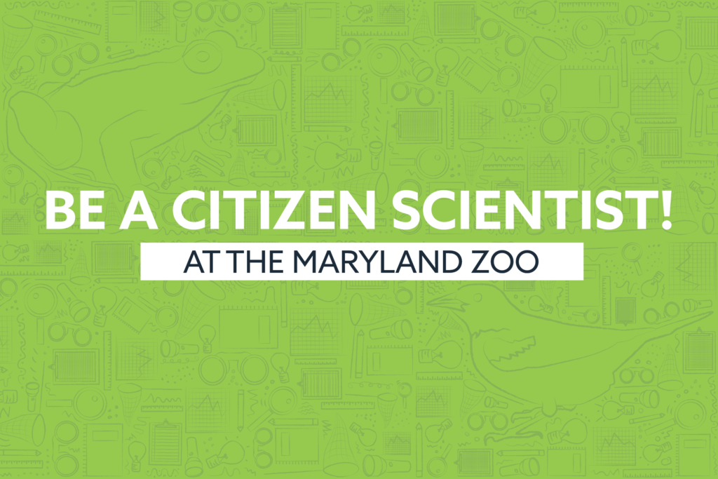 be a citizen scientist at the maryland zoo