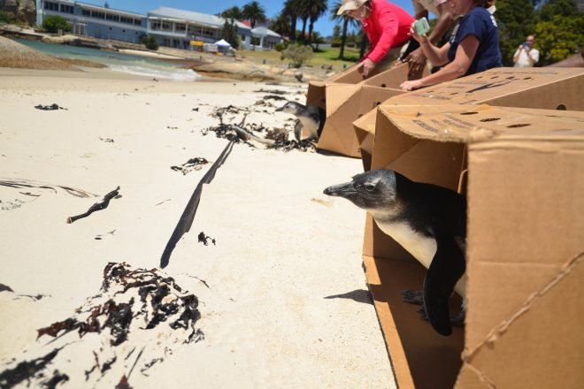 penguins leaving boxes