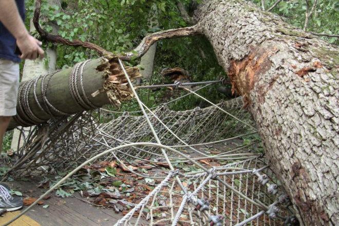 Tree damaging path