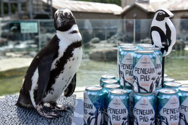 african penguin standing next to penguin pills beer cans