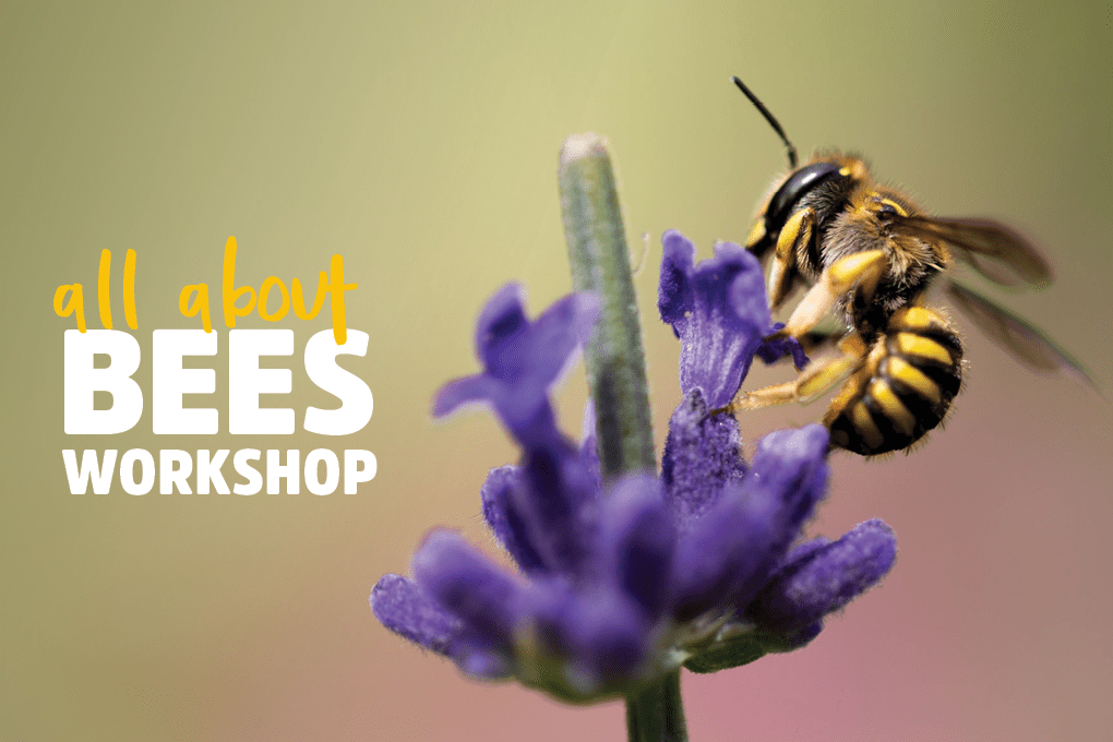 All about bees workshop