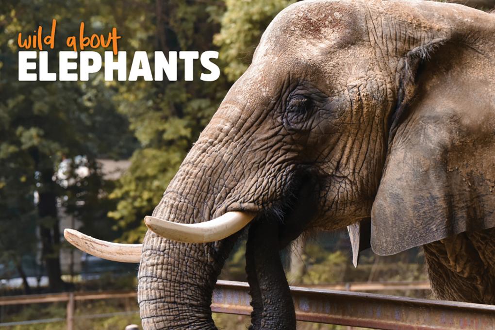 Wild About Elephants