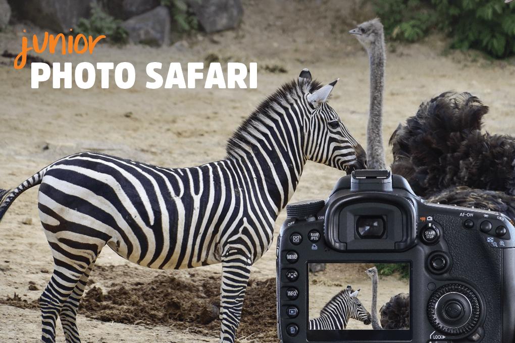 Junior Photo Safari