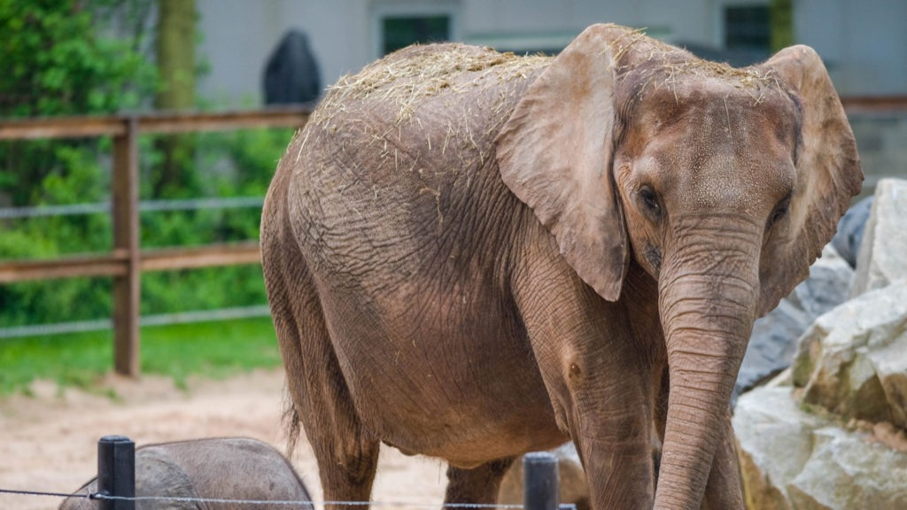 Sponsorship Opportunities The Maryland Zoo