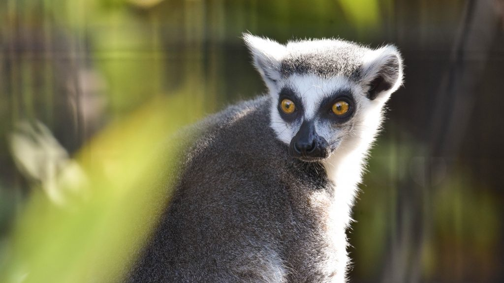 Meet The Animals Maryland Zoo