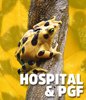 http://www.marylandzoo.org/visit/animal-encounters/behind-the-scenes-tours/animal-hospital-and-panamanian-golden-frog/