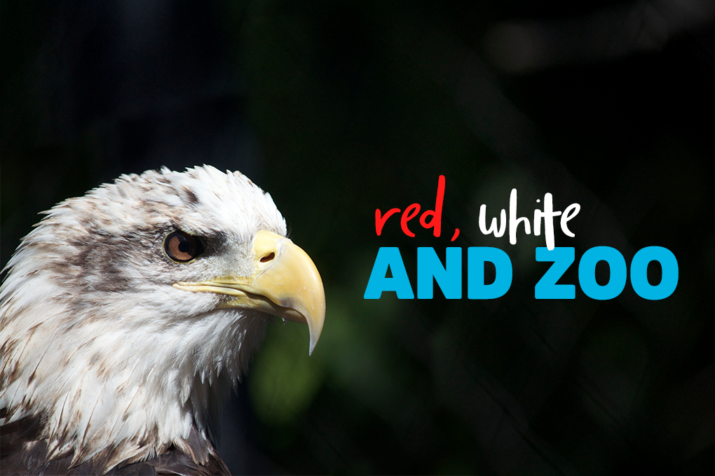 Red, White and Zoo