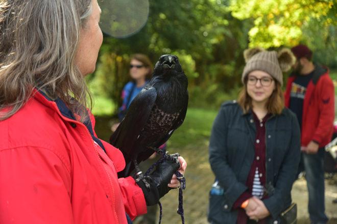 woman holding a raven