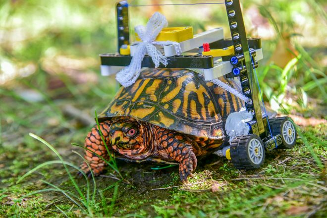 turtle with lego wheelchair