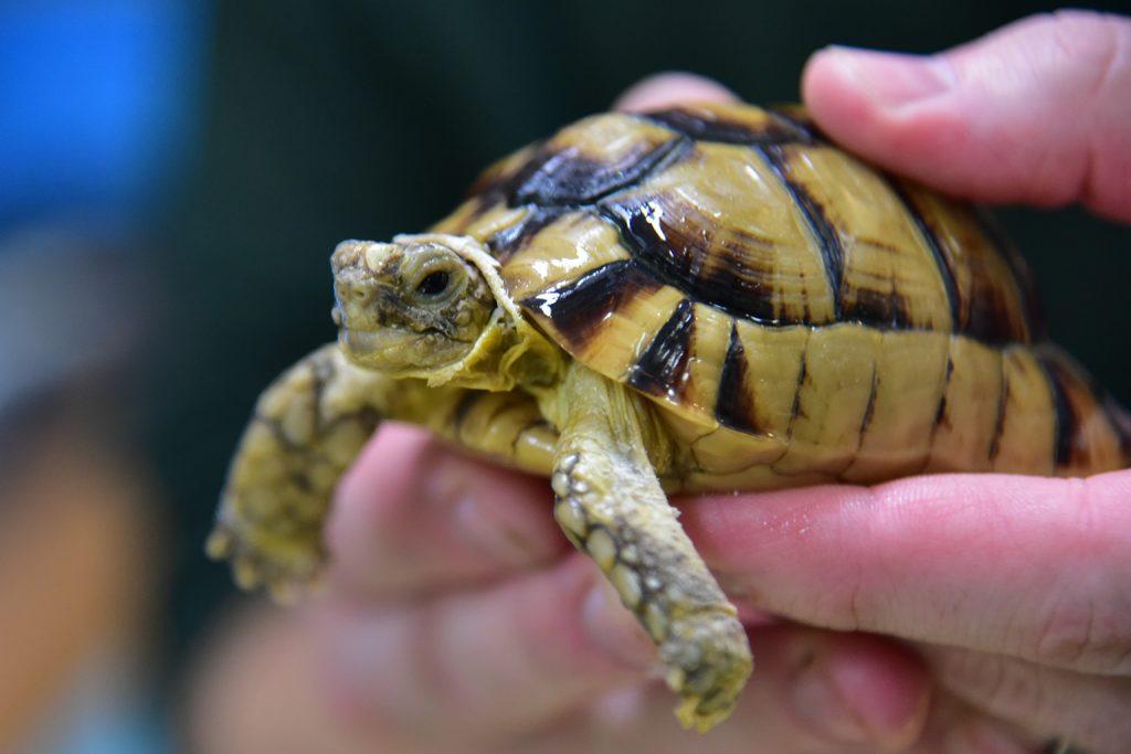 small tortoise background