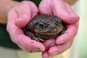 toad being held