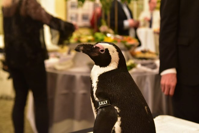 penguin on display