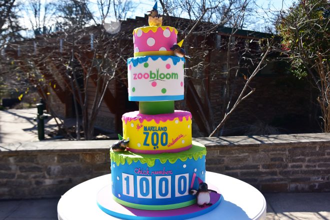 Zoo Bloom cake