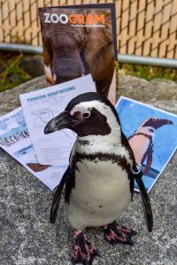 Penguin Partner Package