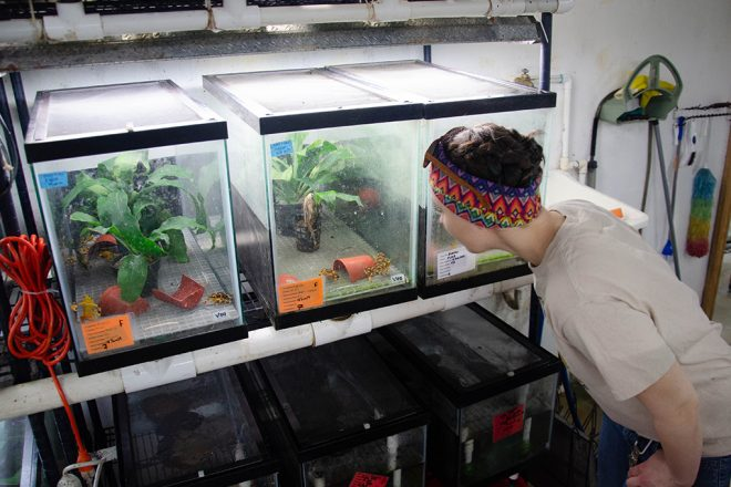 person looking at frog tanks