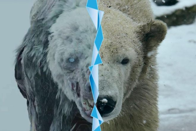 game of thrones bear and polar bear