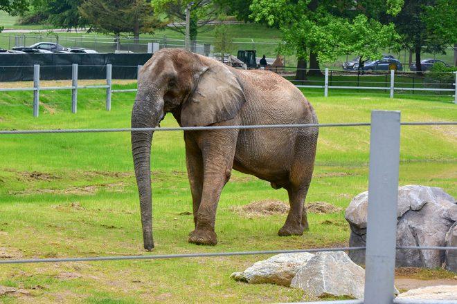elephant in the yard