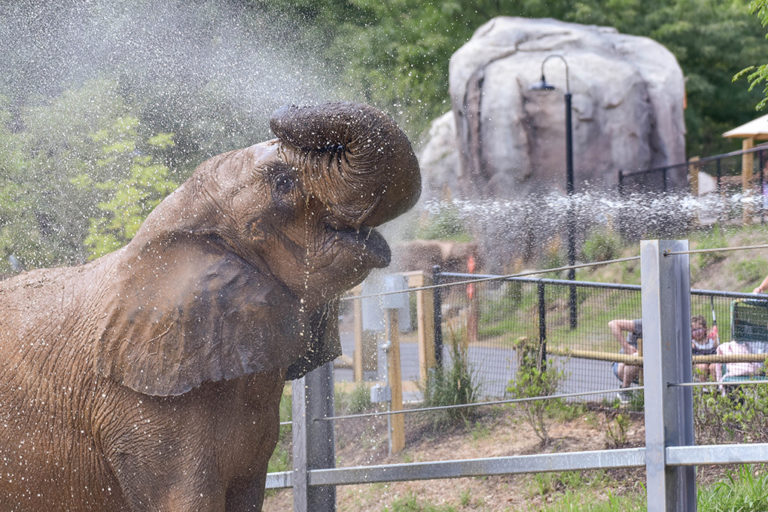 elephant being sprayed with water
