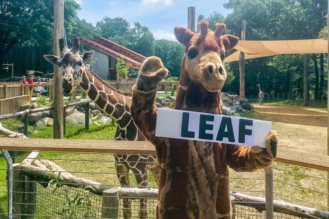 giraffe mascot in front of giraffe holding sign