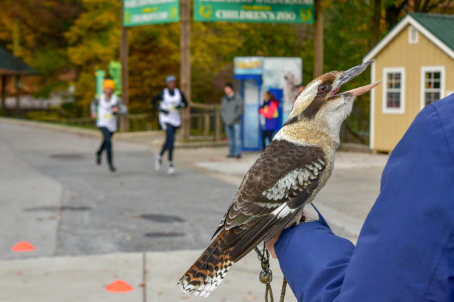 person holding kookaburra