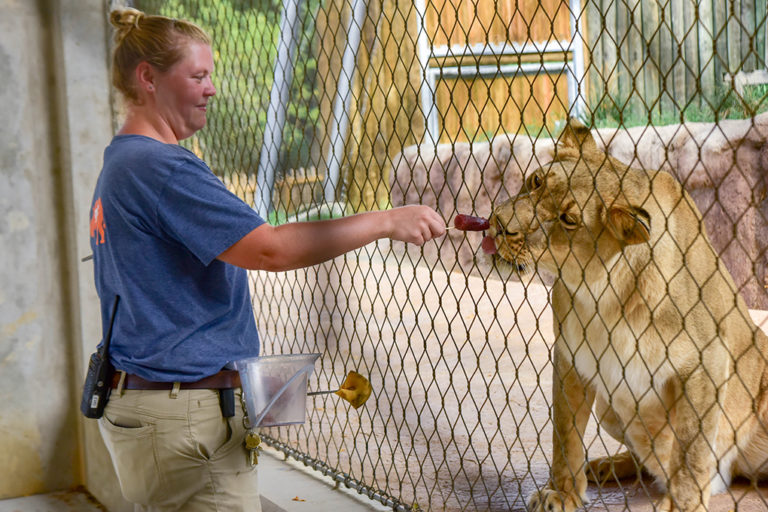 keeper training lion