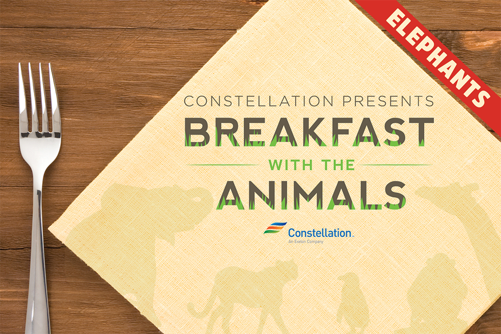 Constellation presents breakfast with the elephants