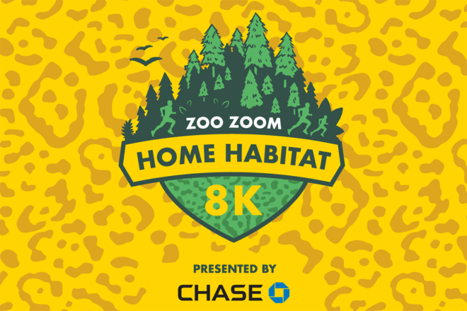 zoo zoom home habitat 8K