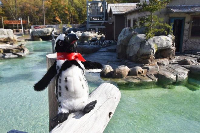 Penguin Encounter Adoption Package image
