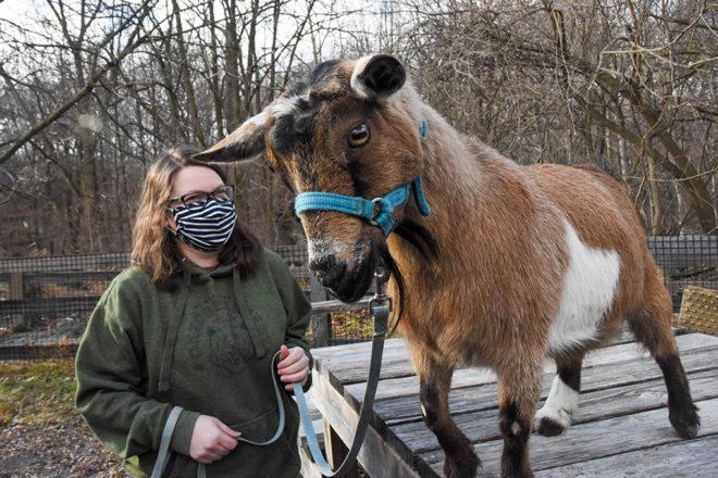 Goat Trek image