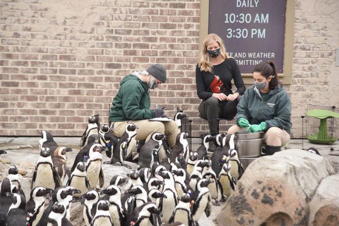 Penguin Training image