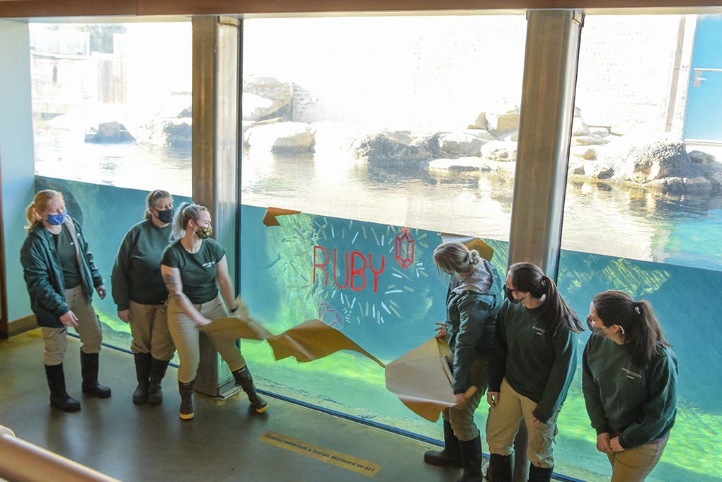Zookeepers revealing name Ruby written on glass viewing window