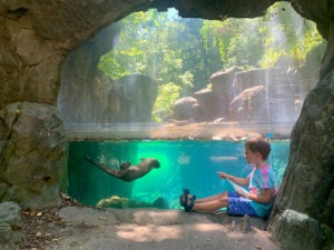 Child sitting in front of otter habitat, otter swimming underwater.