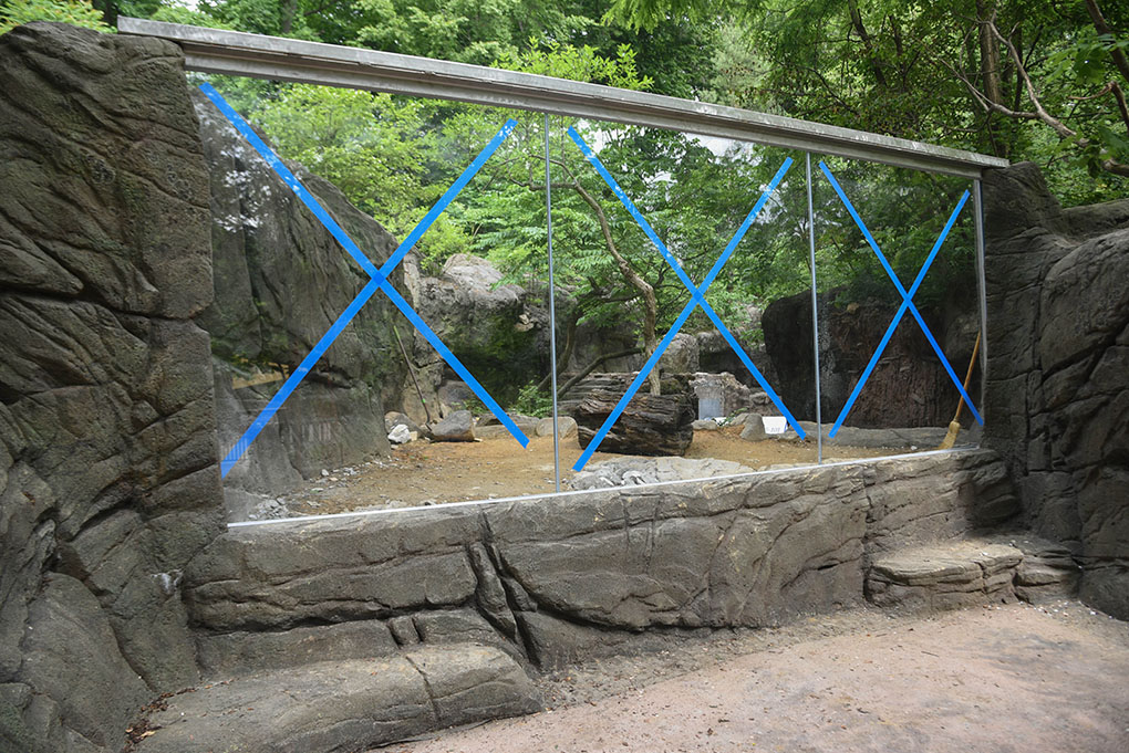 otter habitat with new glass installed.