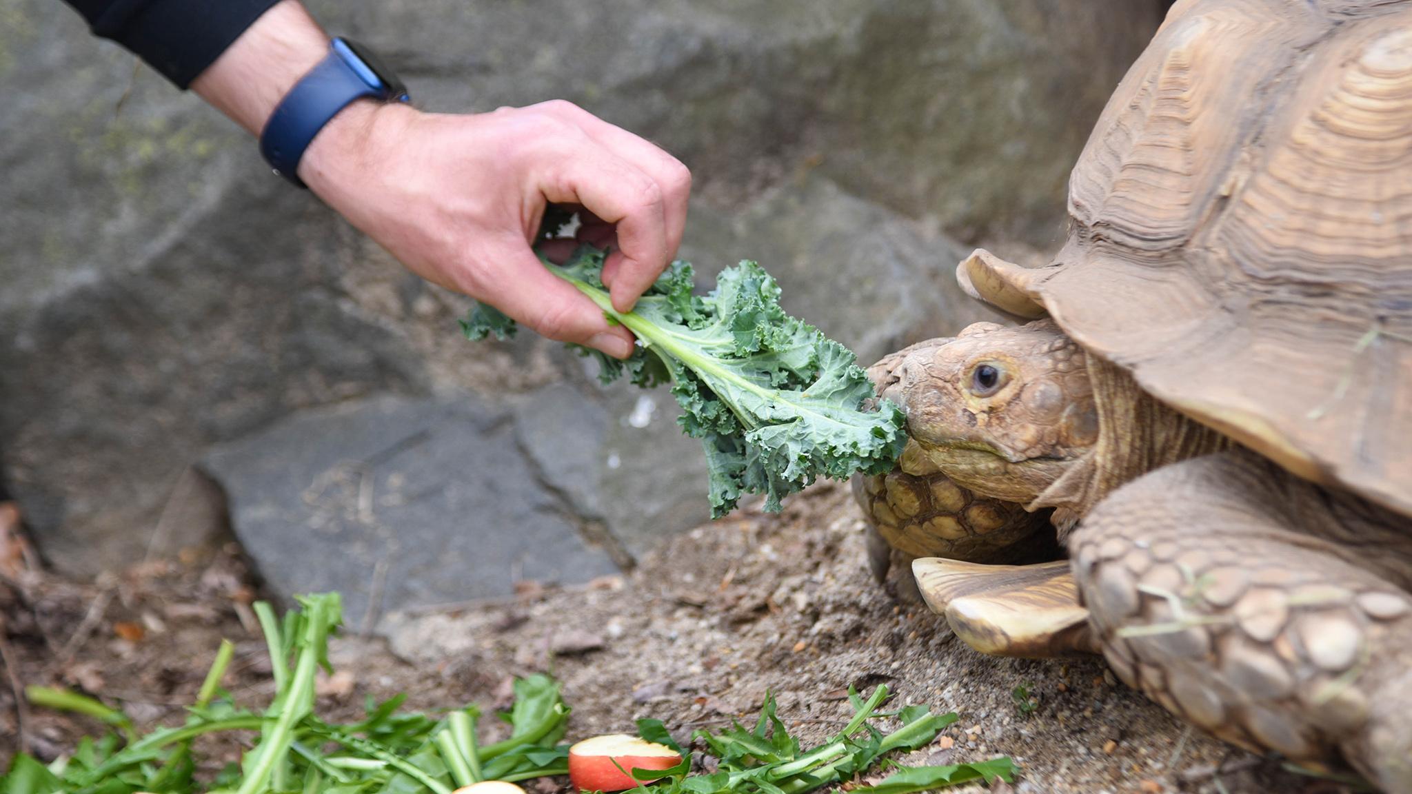 person feeding a tortoise.