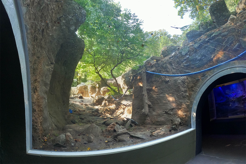 View inside a clear overhead glass tunnel looking at rocky pool area without water.