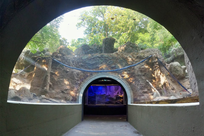 Clear overhead glass tunnel