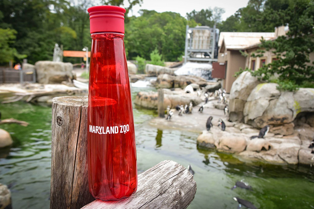 reusable water bottle on fence in front of Penguin Coast.