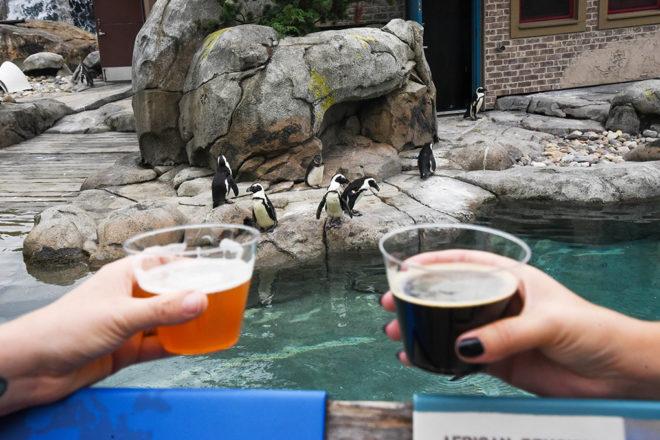 two hands holding beer cups in front of penguin habitat
